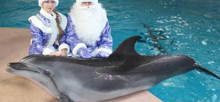 Новый год с дельфинами